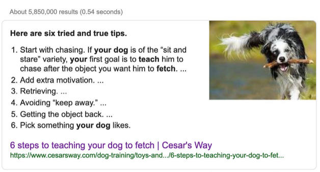 how-to-teach-your-dog-to-fetch-search-result.jpg